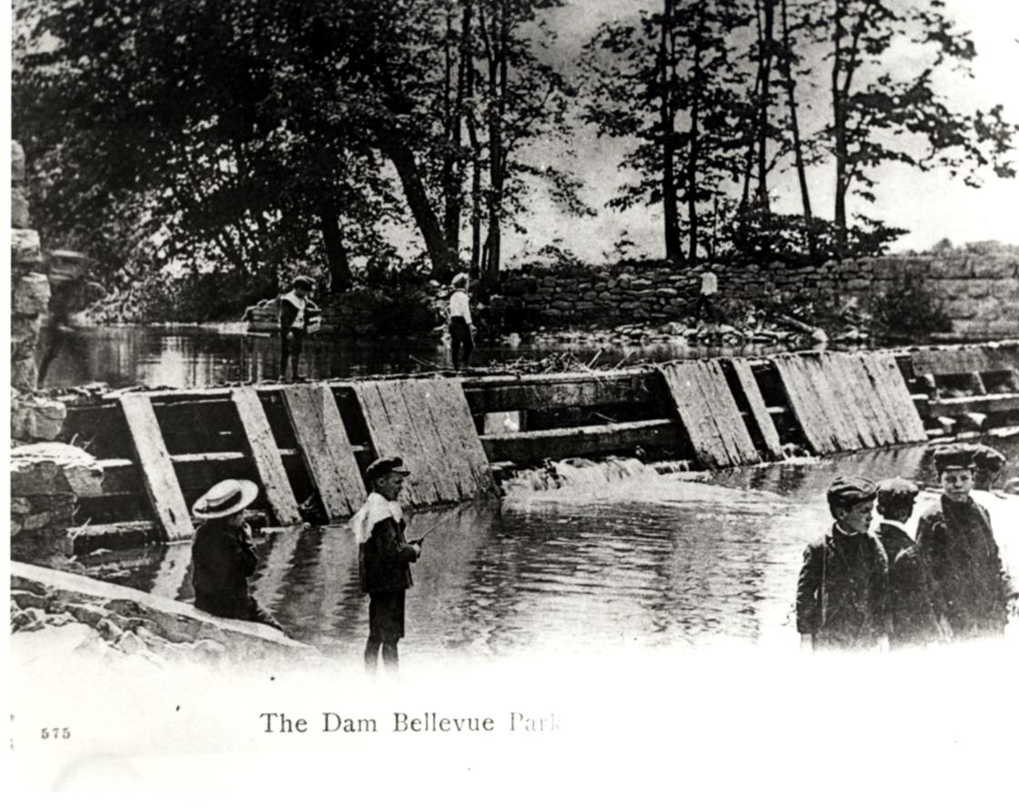 Beaver Dam at Bellevue Park